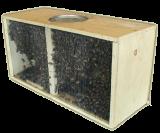 Bienen und Schwärme